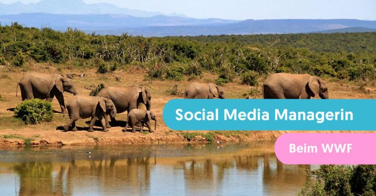 Social-Media-Managerin-WWF